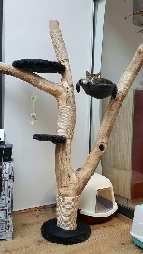 猫喜欢的树