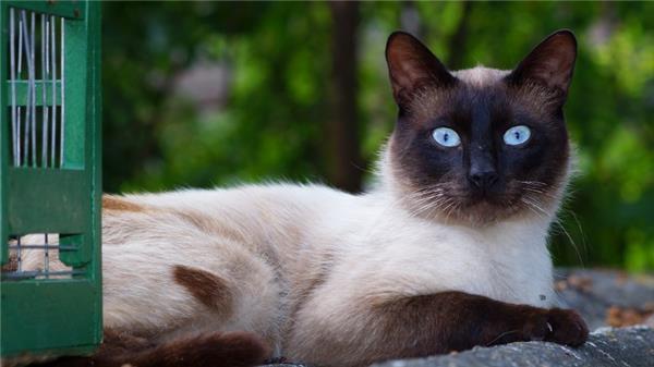 毛绒绒的猫咪图片