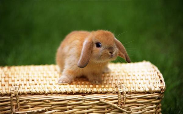 可爱呆萌长耳兔精美高清