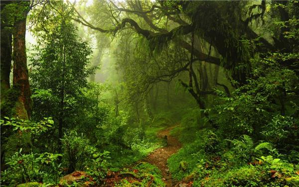 唯美的森林美景高清桌面壁纸
