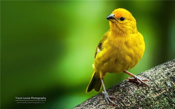 羽毛五颜六色的野生小鸟大自然动物摄影高清特写图片