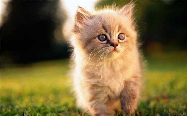 无敌萌的猫咪