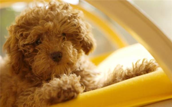 可爱卖萌的小狗狗图片